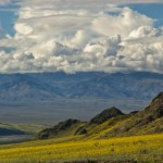 Death Valley in Bloom, Jubilee Pass